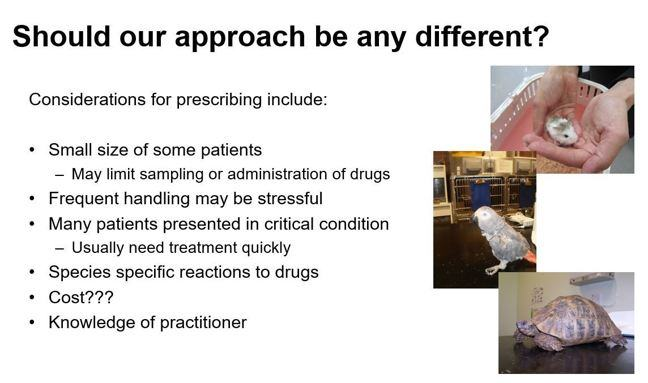 A screenshot of a powerpoint slide showing considerations needed for antibiotic prescribing in exotic pets.