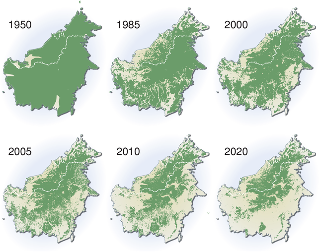 Series of maps showing Borneo's rainforest cover in green in 1950, 1985, 2000, 2005, 2010 and a prediction for 2020. The maps turn from almost 100% cover in 1950 to well less than 50% in this time with the largest losses occurring between 1950 and 1985 and 2005 and 2010.