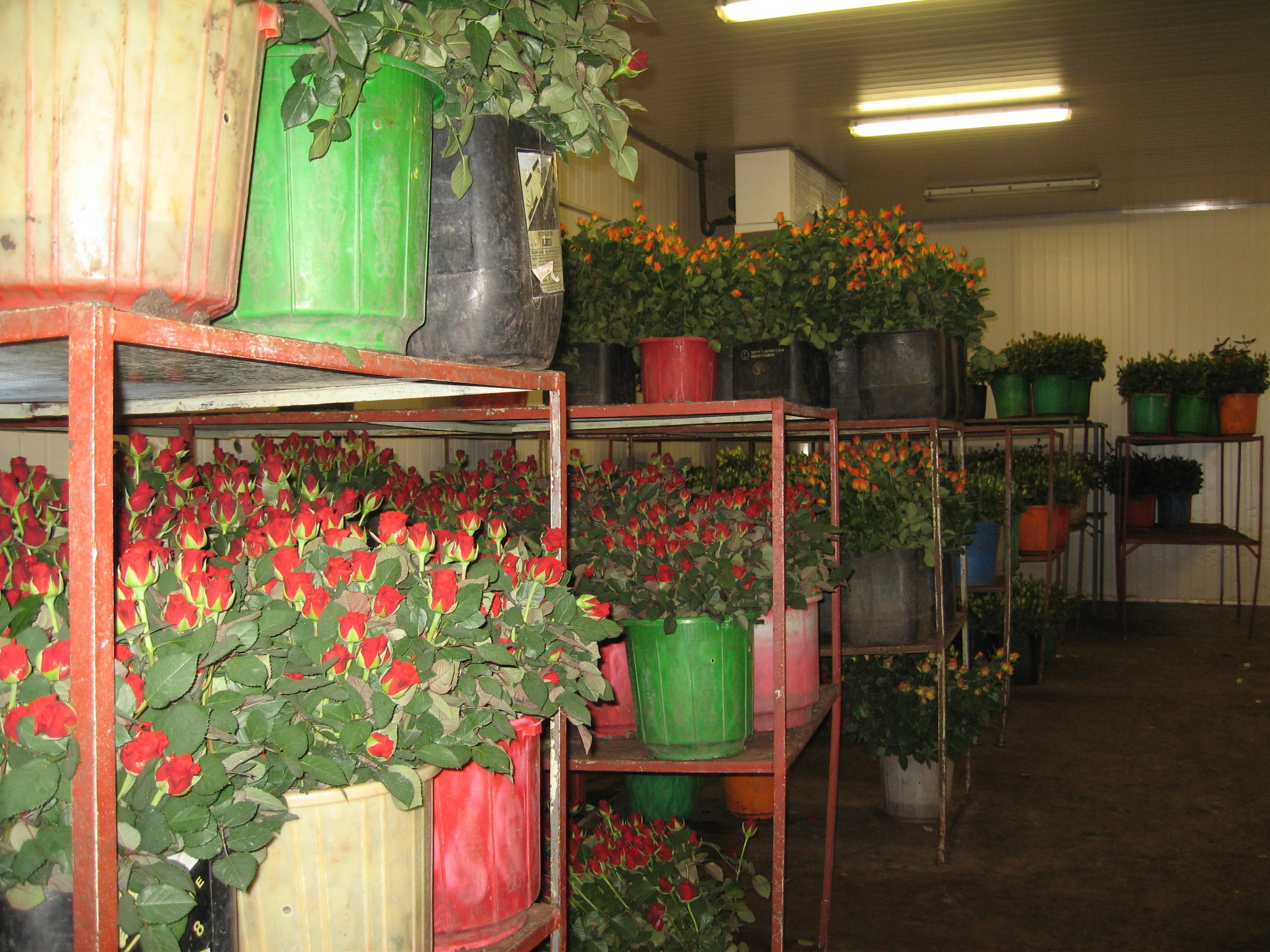 Rose storage