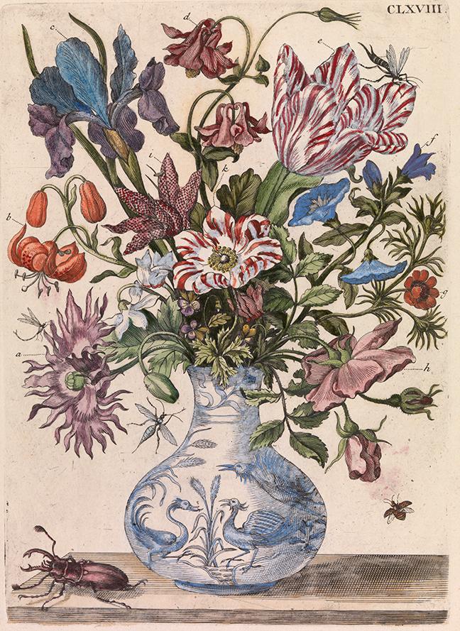 Maria Sybilla Merian, *De Europische Insecten* (Amsterdam, 1730), Tab. CLXVIII: Spring flowers in a Chinese vase. © The Board of Trinity College Dublin