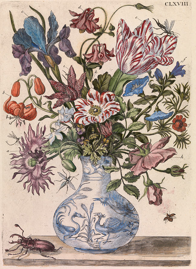 Maria Sybilla Merian, *De Europische Insecten* (Amsterdam, 1730), Tab. CLXVIII: Spring flowers in a Chinese vase. © The Board of Trinity College Dublin