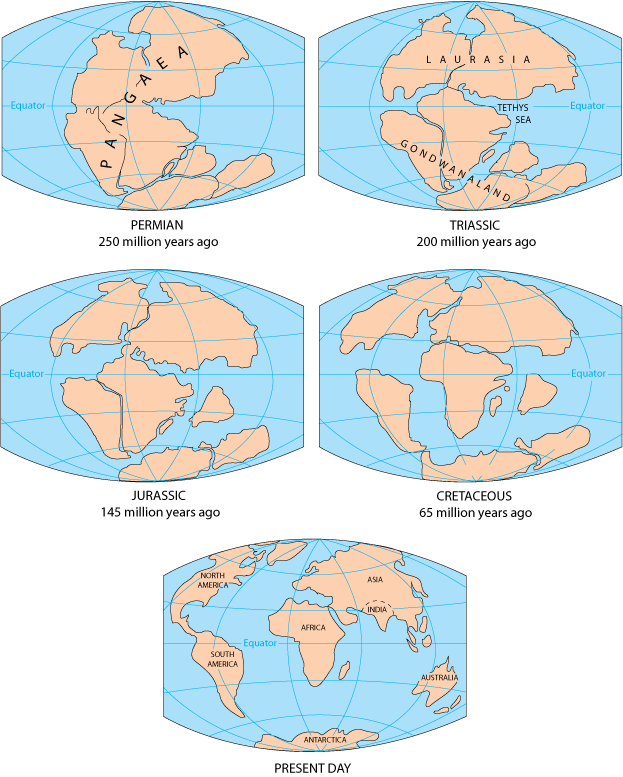 Diagrams that show the supercontinent Pangaea on a world map during the Permian geological time period 250 million years ago, next showing a further break up of the continent during the Triassic geological time period 200 million years ago, next showing a further break up of the continent during the Jurassic geological time period 145 million years ago, next showing a further break up of the continents during the Cretaceous geological time period 65 million years ago, finally showing the position of the continents on a world map at present day
