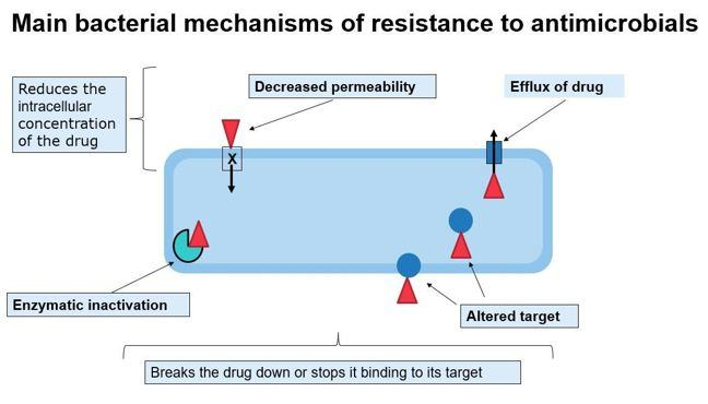 Image showing the main bacterial mechanisms of resistance to antimicrobials including decreased permeability, enzymatic inactivation and altered targets.