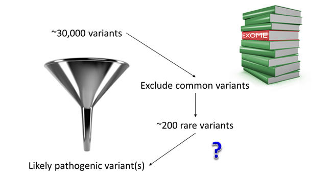Exome sequencing results in the identification of approximately 30,000 variant in each individual. To identify the variant that is most likely to be causing the disease, it is necessary to filter out most of them. The first filtering step removes variants that are common in the general population (i.e. can be found in public databases of genetic data). After this, typically ~200 rare variants are left. This is still quite a big number and additional strategies are needed to narrow the number down to the one causative mutation.