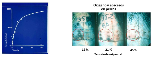 Image showing the differences in abscesses in dogs with different levels of oxygen.