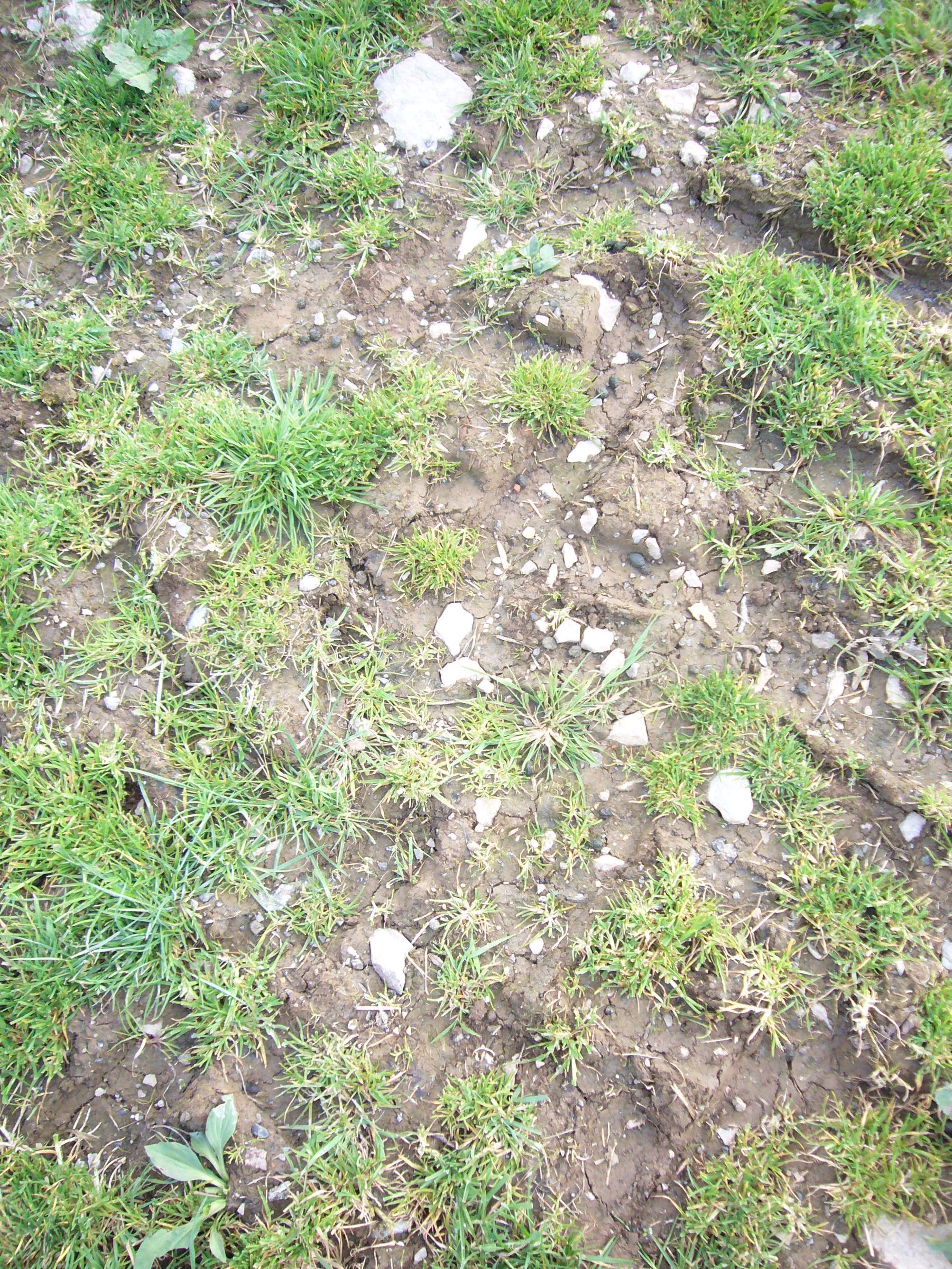 Compacted soil, with tractor tread evident