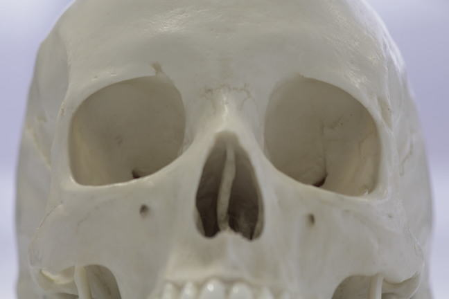 Male skull close up