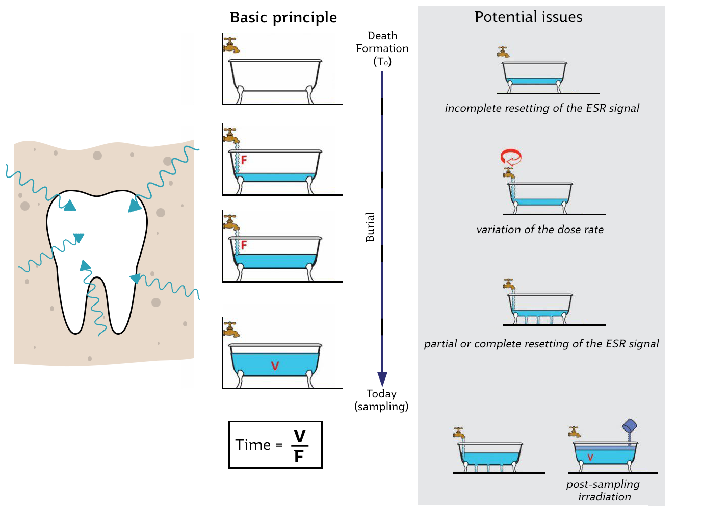 A series of bathtubs representing the radiation in a tooth. The increasing volume represents the total dose, while the flow of the tap represents the rate. Over time, the radiation in the tooth following its burial changes, and variations on its dose must be accounted for.