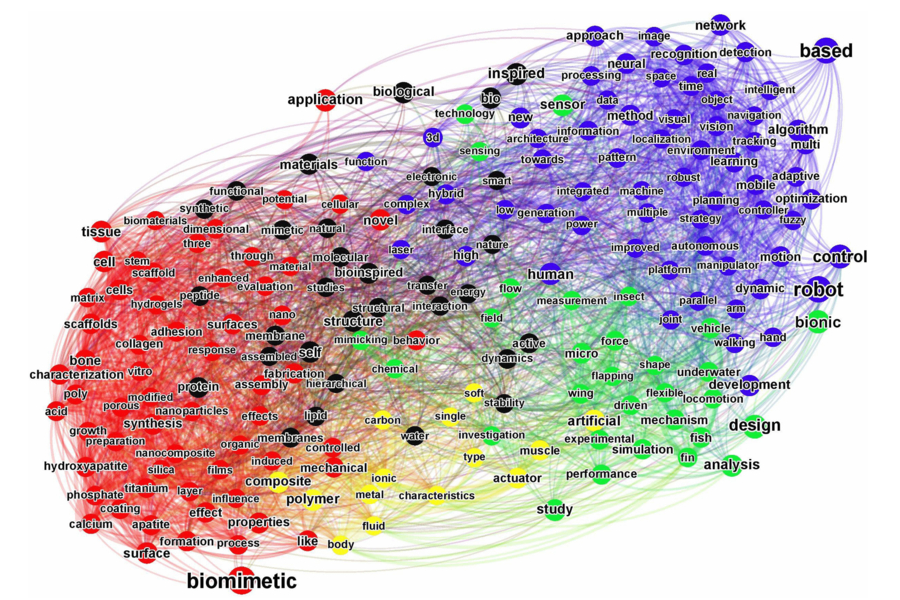 Connectedness of popular terms in biomimetics. Two words in the word cloud in figure 5 are considered connected if they co-occur within the same titles, with the co-occurrence frequency giving the connection strength. A Force Atlas algorithm was applied to these node words and connection strengths, which pulls together the connected terms. The graph is colored according to a modularity analysis, which finds communities within the connected network, where a community is defined to be a group of nodes that have denser intra-connections but sparser connections with other communities.