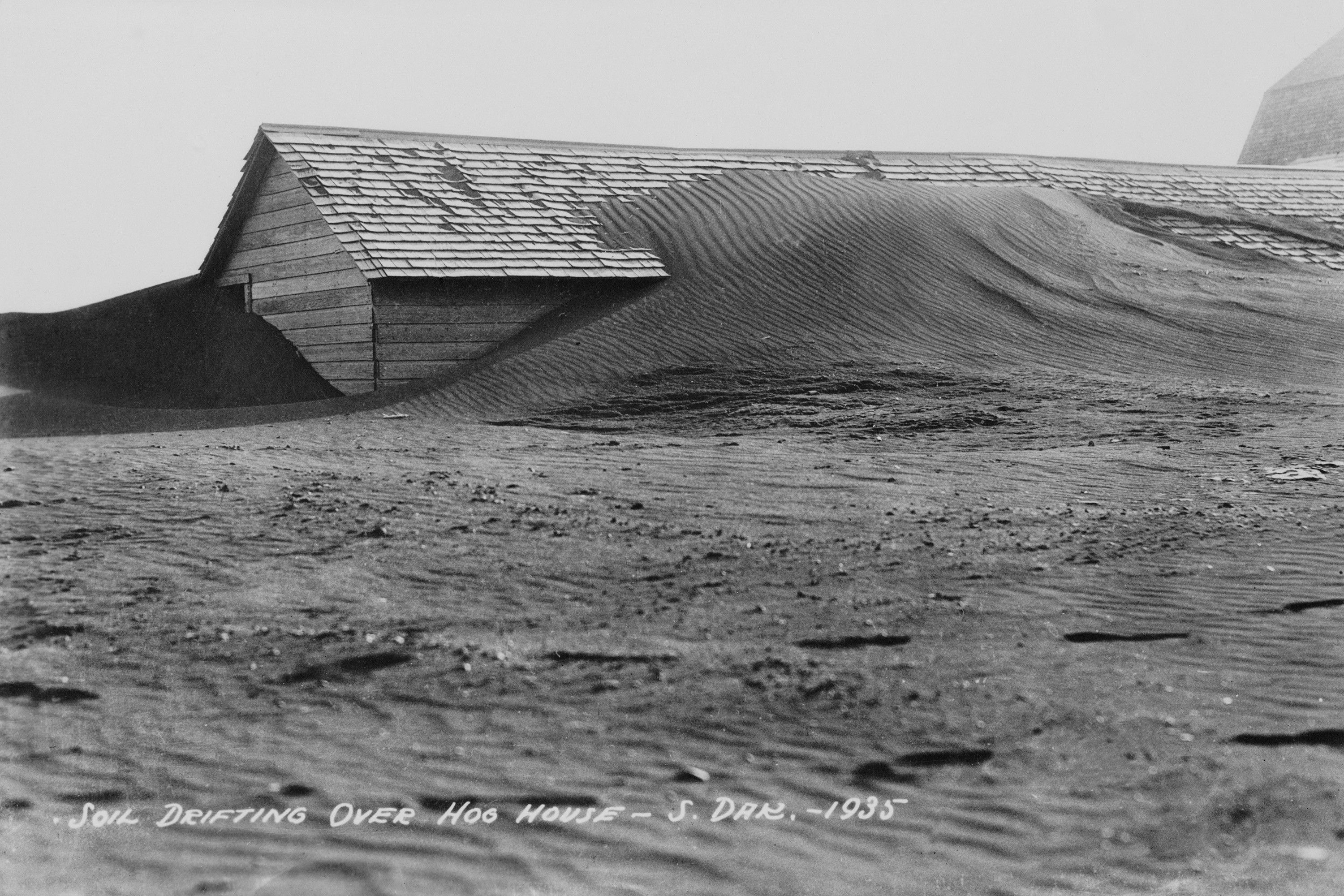 """A black and white photograph of a wooden building mostly covered by dry dust. A handwritten caption on the photograph reads """"SOIL DRIFTING OVER HOG HOUSE- S. DAK.-1935"""