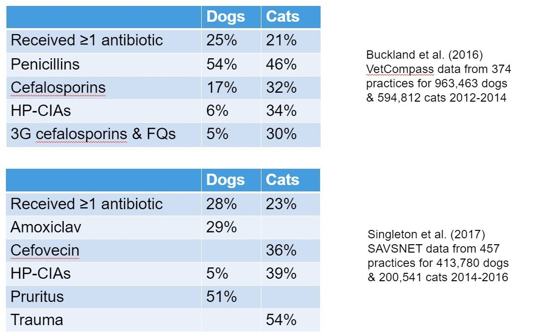 An image of dogs and cats showing the 2 sets of results from an investigation conducted twice about the percentage of dogs and cats who received specific antibiotics.