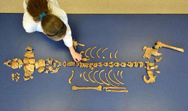 Bones laid out