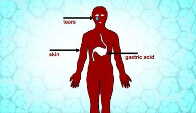 Cartoon image of body with tears, skin, and gastric acid labelled to show the primary defences in the body