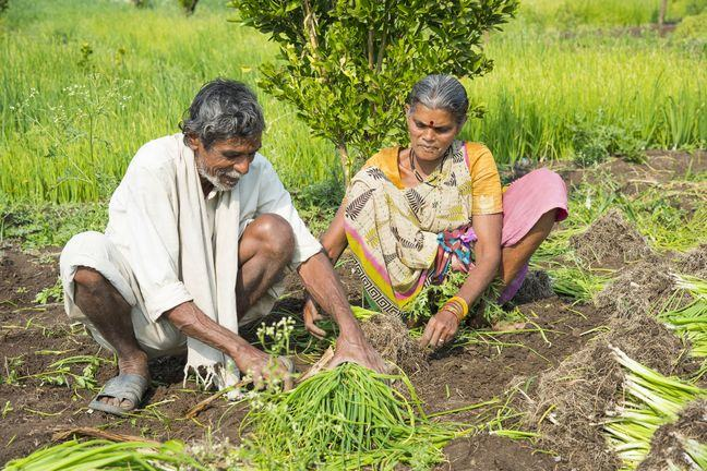 A photograph of a male and female, of South East Asian appearnce, crouching and tending to a plant, in a cultivated field