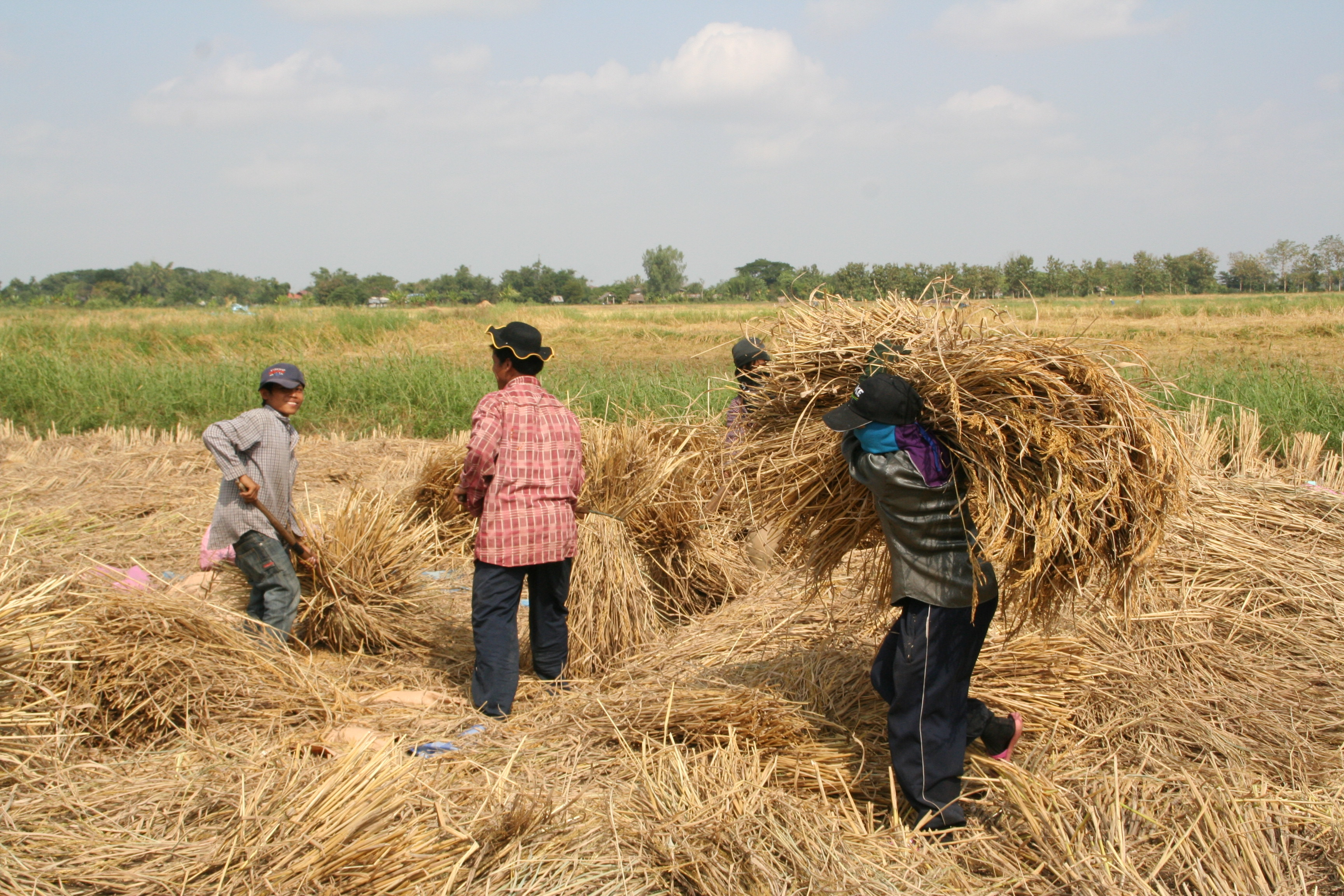 Farmers working on a rice field_IMG_5914.JPG