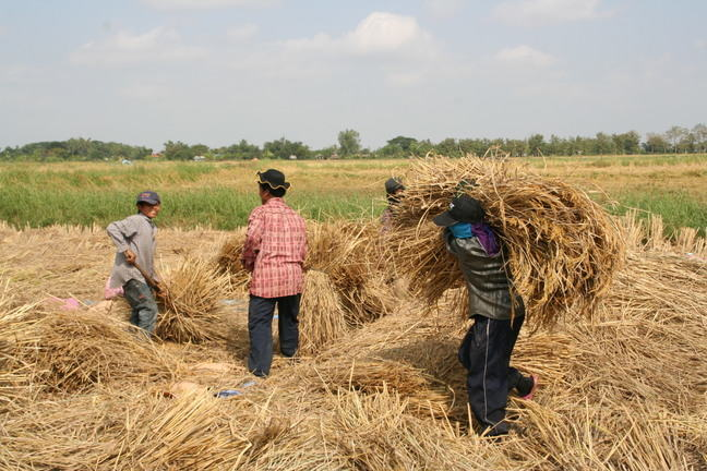 Workers threshing rice_IMG_5914.JPG
