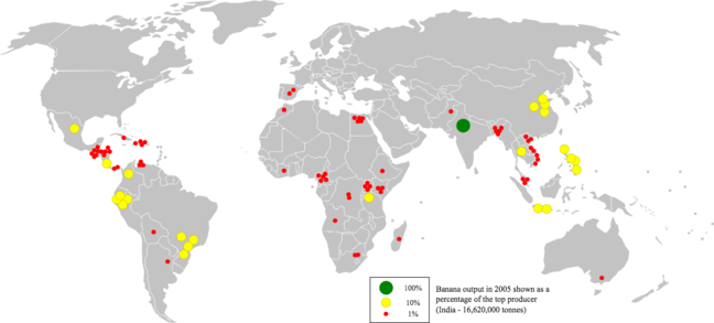 Map showing the export rates of bananas across the world, India being the biggest exporter.