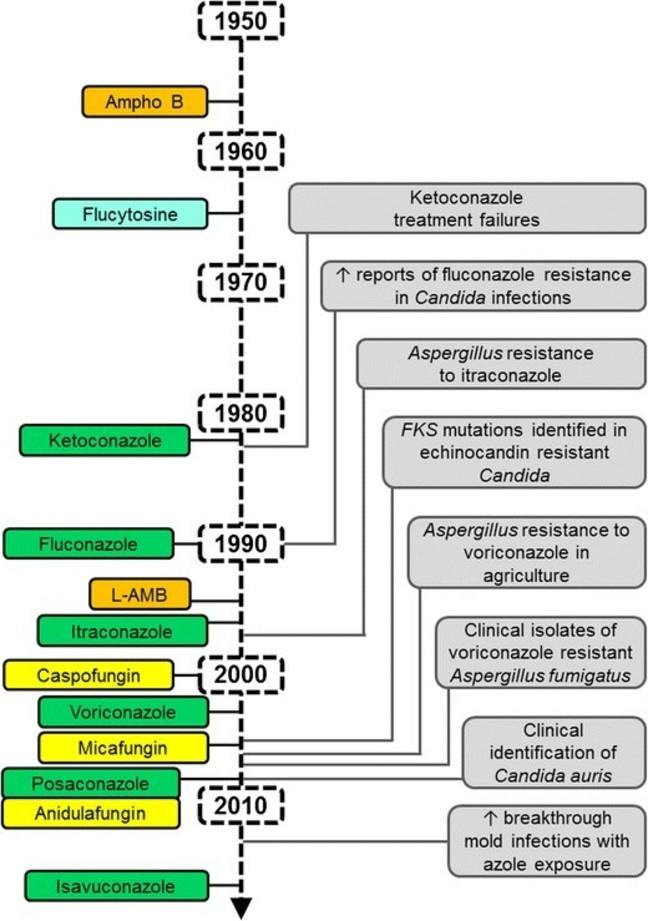 timeline of antifungal resistance development from 1950 to present day. Shows a relationship between newly introduced antifugals and resistance developing a few years later
