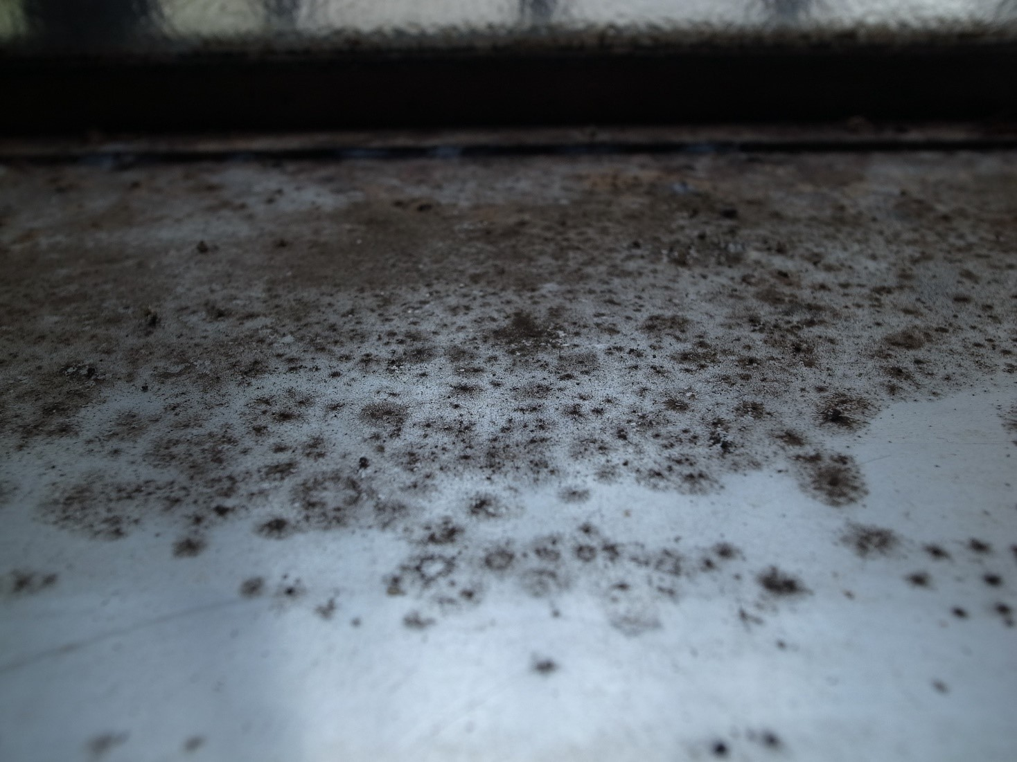 image of black mould growing on a surface at home. Could potentially be aspergillus