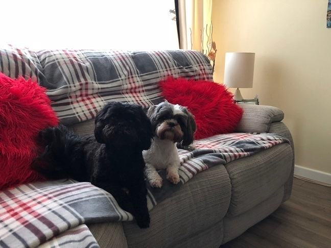 Cherry and Poppy on the sofa