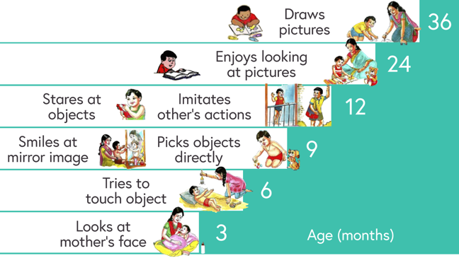 Illustration of the expected visual milestones for children from the ages of 3 to 36 months, as described below