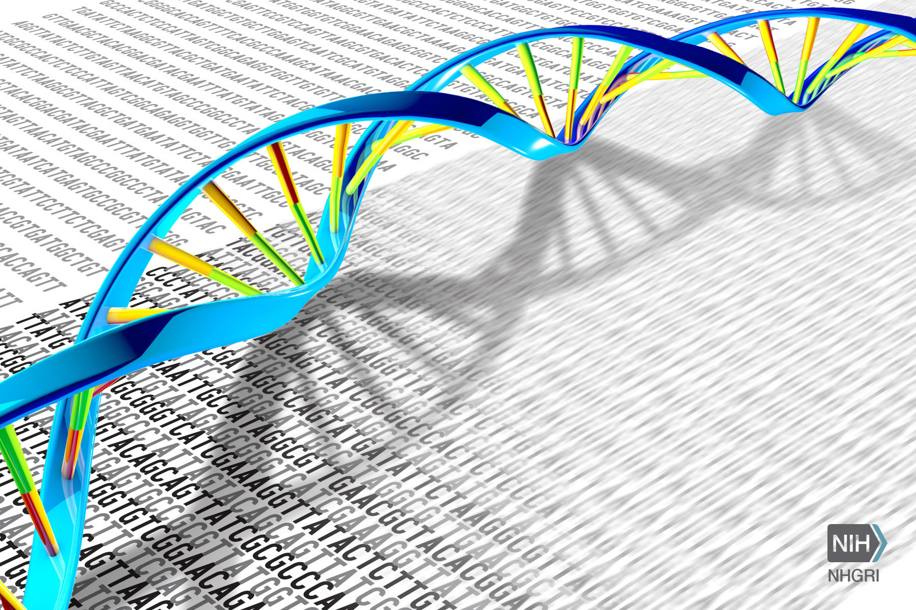 DNA Double Helix and Sequence