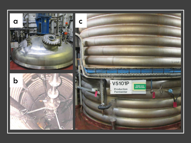 Three pictures of the large scale fermentors in GSK, the first is the same as the picture at the beginning of the article. The second shows the inside of the empty fermenter vessel. Visible are the heating coils inside the vessel and the impeller used to mix the fermenter contents. A small human figure can be seen in the bottom of the vessel as an indication of scale. The third picture shows the heating coils from the outside of the vessel. These are used to circulate temperature-controlled liquid, allowing the fermenter temperature to be regulated.
