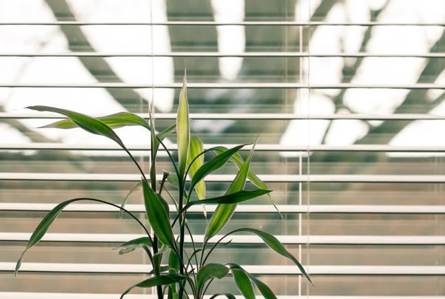 Photo of a plant on a shelf