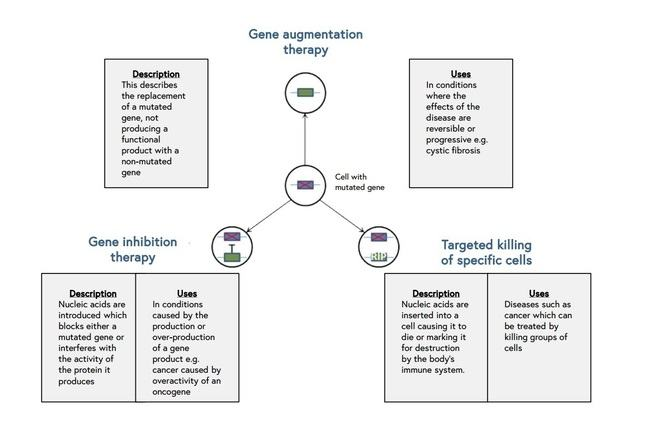 Gene augmentation therapy diagram