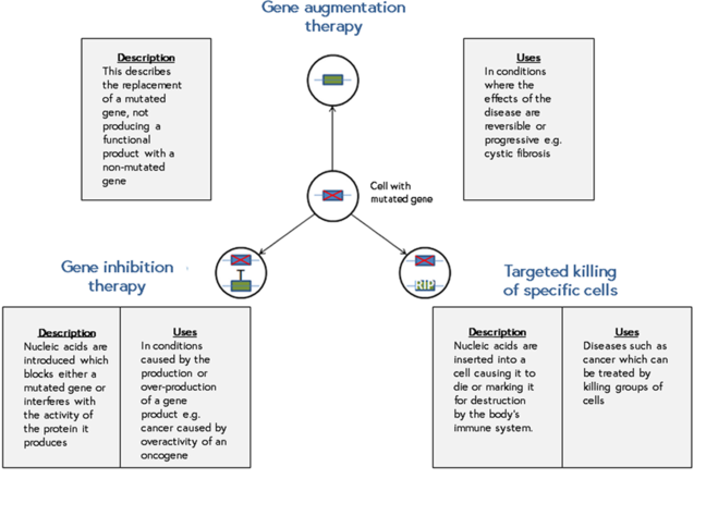 Gene augmentation therapy diagram?
