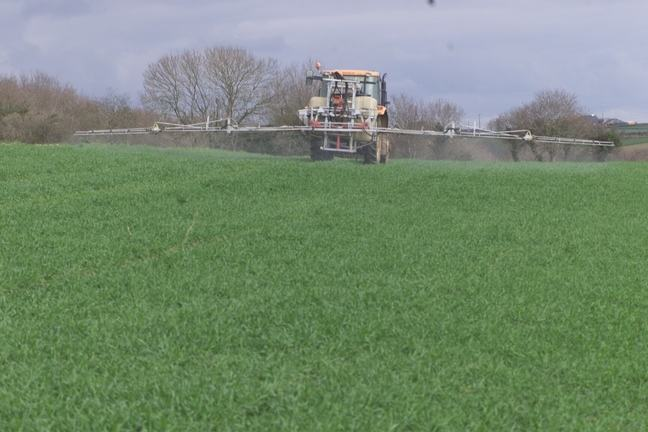 Spraying pesticides in a wheat field using a tractor