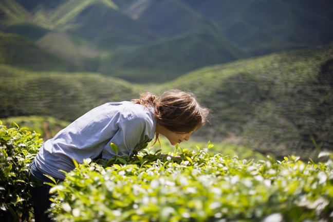Woman smelling tea leaves.