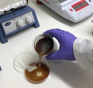 pouring liquid agar into petri dish