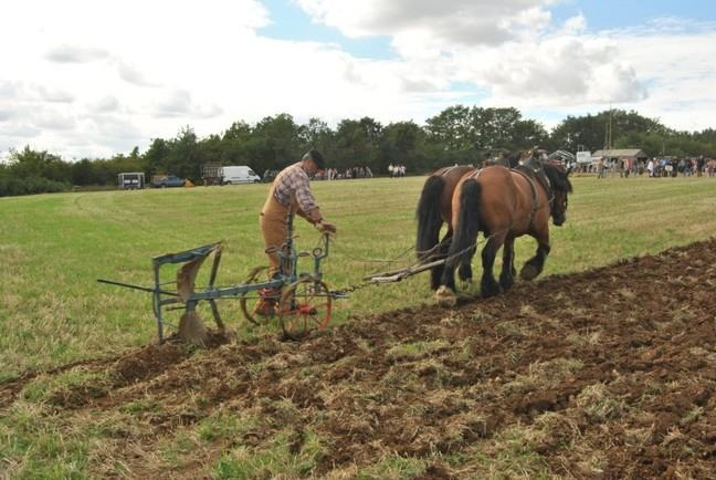 Traditional plough being pulled by two horses and operated by a farmer