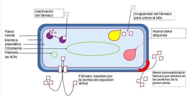 Resistance mechanisms displayed by bacteria to evade antibiotics.