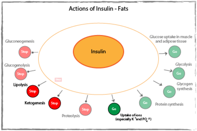 Actions of insulin on fats diagram.