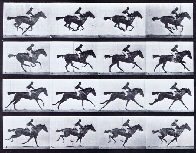 Muybridge Horse Image repeated many times