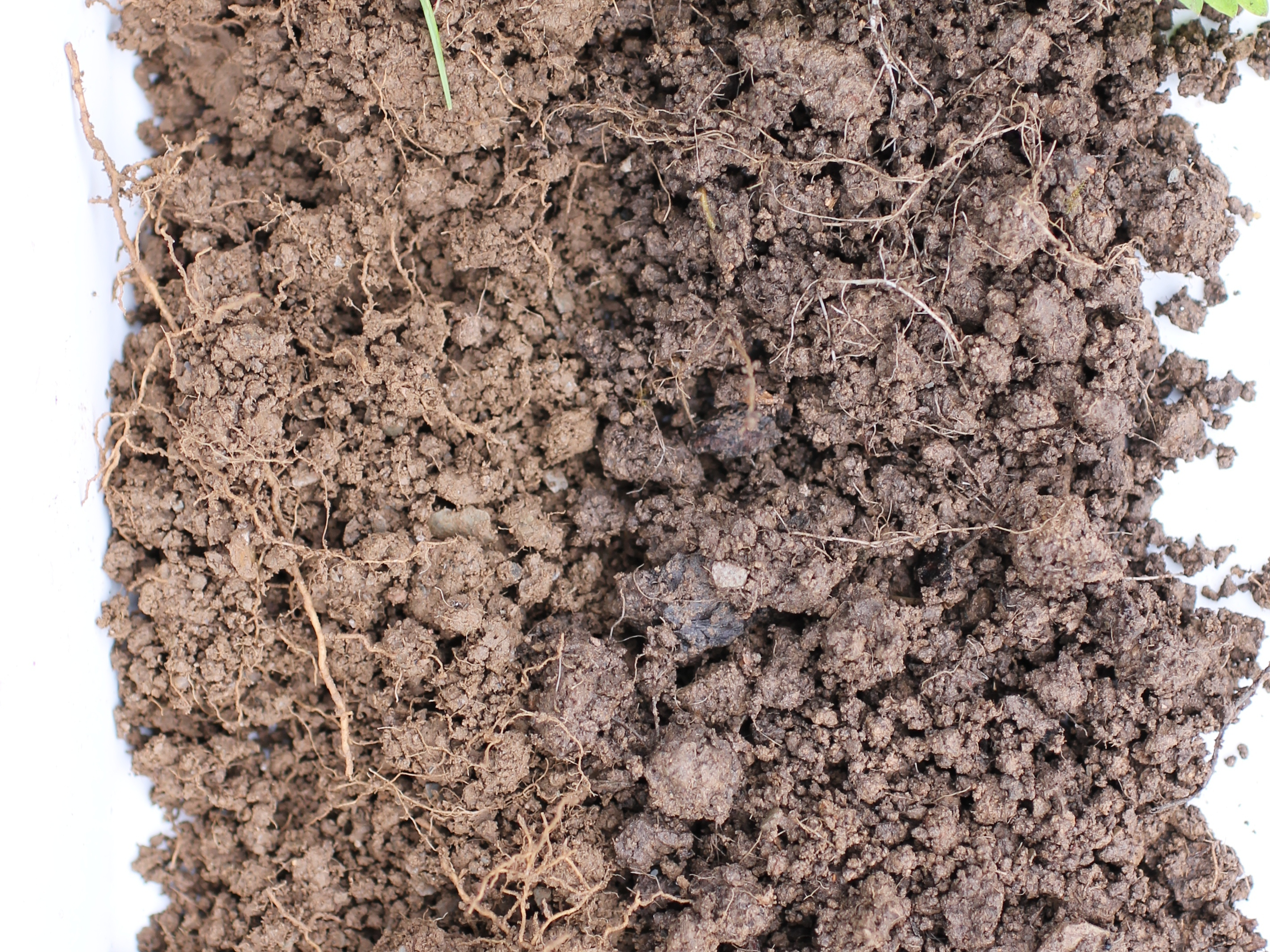 A photo of two different soils side by side. The one on the left is much lighter in colour.
