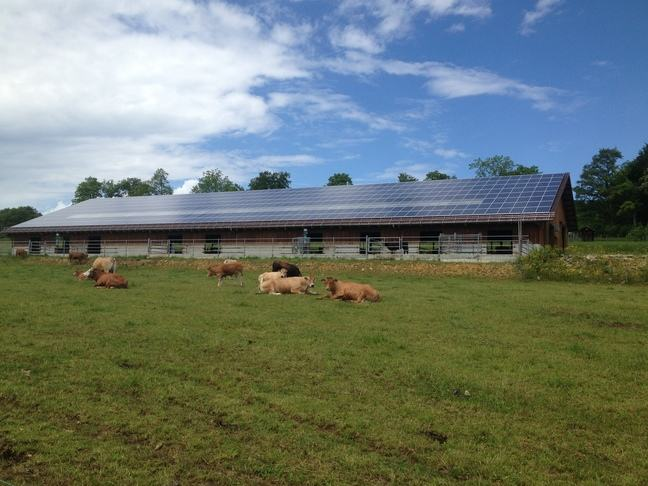 A photo of cows lying down in a field with a cow shed in the background that has solar panels on the roof