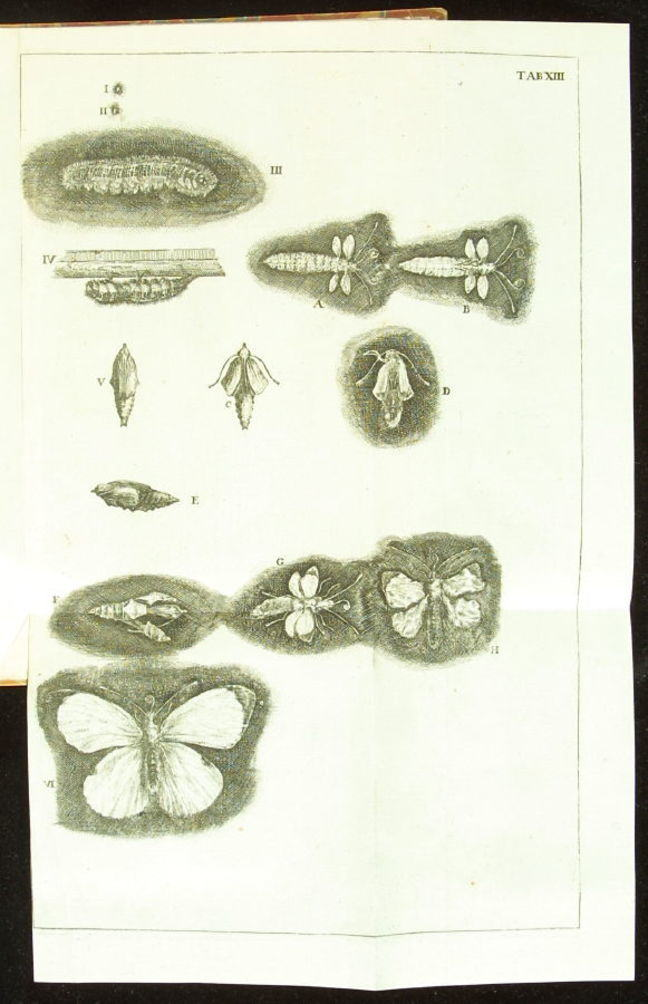 From caterpillar to butterfly, as illustrated in Swammerdam's *Historia insectorum* of 1669