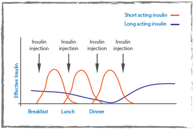 Graph with long acting insulin as the y-axis and breakfast, lunch and dinner as the x-axis. A blue line on the graph shows the long acting insulin and red peaks show the short acting insulin after insulin injections.