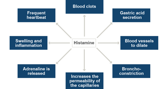 The diagram shows the symptoms triggered through the release of histamine, namely blood clots, gastric acid secretion, dilated blood vessels, broncho-constriction, increase of the permeability of the capillaries, release of adrenaline, swelling and inflammation, and a frequent heartbeat.