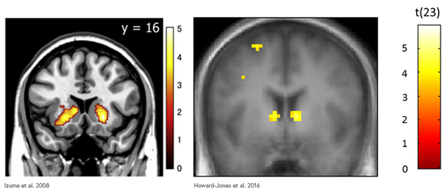 fMRI from two experiments. The left image shows two yellow glowing regions in the subcortical regions of the brain. The right image shows two yellow glowing regions in the same subcortical regions of the brain and a lesser hotspot in the cortex.