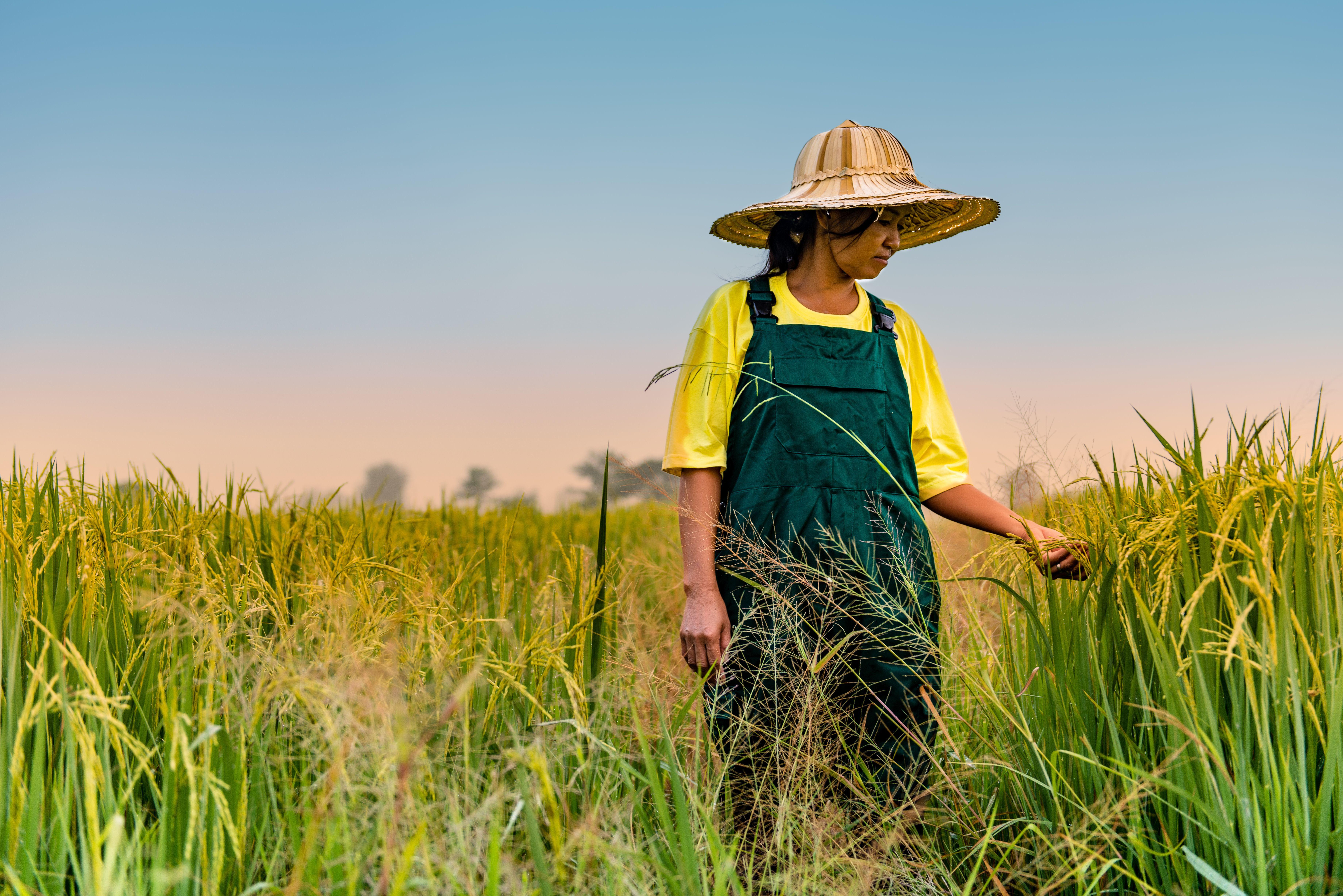 a photo of a south east Asian woman, walking through a crop