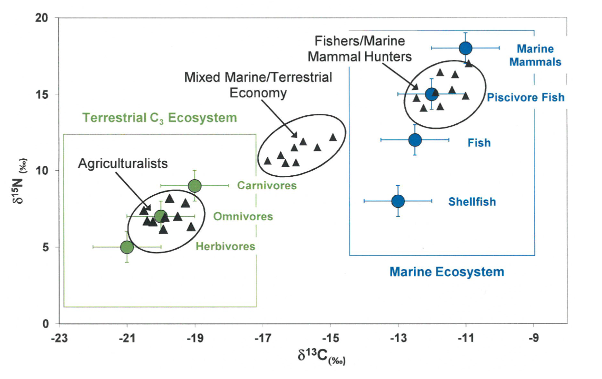 A graph showing isotopic ratio. The y axis measures increasing concentration of nitrogen and the x axis measures increasing concentration of carbon. The graph illustrates the nitrogen to carbon ratio for 3 Neolithic populations including Agriculturalists, Mixed Marine/Terrestrial Economy and Fishers/Marine Mammal Hunters. The isotopic ratio for Agriculturalists show high nitrogen to low carbon. Whereas Fishers/Marine Mammal Hunters show high nitrogen to high carbon. Mixed Marine/Terrestrial Economy positions itself between the other 2 Neolithic populations. Grouped in Agriculturalists are carnivores, Omnivores and herbivores. Grouped in Fishers/Marine Mammal Hunters are marine mammals, piscivore fish, fish shellfish.
