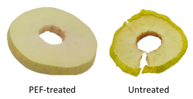 Two rings of dried apple, the PEF treated ring looks freshly cut, the ring of untreated apple looks withered and is browning