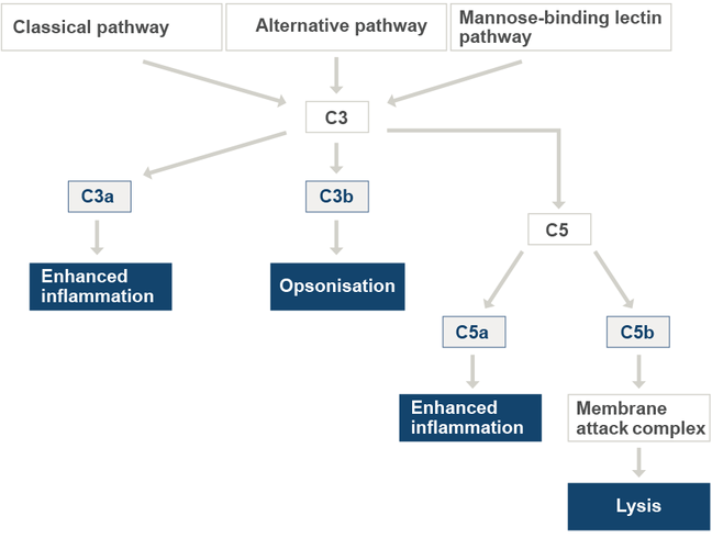 The diagram describes the complement cascades and the symptoms caused by the metabolized components. The alternative pathway can lead to opsonisation and the mannose-binding lectin pathway to lysis.