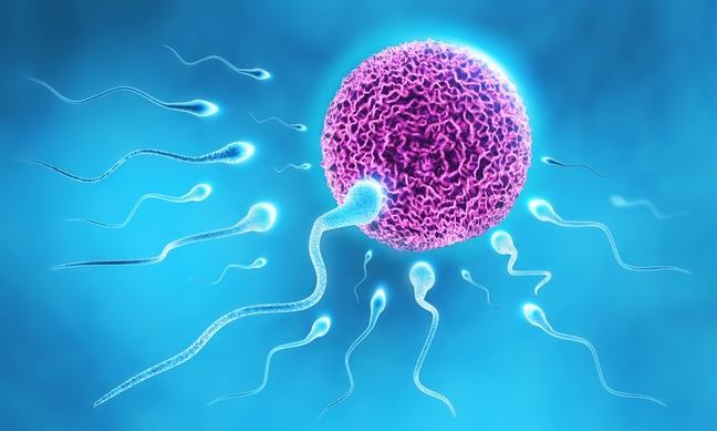 Illustration of fertility