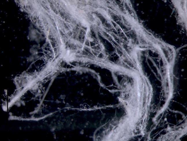 Asbestos fibre