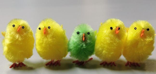 Easter chiks